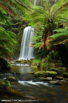 Beauchamp Falls, Otway Ranges, Victoria, Australia