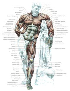 Anatomy ...