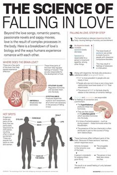 Psychology infographic and charts Male & Female Erogenous Zones and the Science of Falling in Love Infographic Description Male & Female Erogenous Zones Science Of Love, Brain Science, Biology Of Love, Science Chemistry, Science Facts, Med Student, Female Erogenous Zones, Endocrine System, Psychology Facts