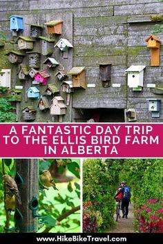 Ellis Bird Farm: One of the Best Day Trips from Calgary & Edmonton - Hike Bike Travel Alberta Travel, Canadian Travel, Family Travel, Family Camping, Calgary, Travel Around The World, Day Trips, Travel Pictures, Places To Travel