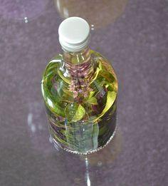 Of het nu winter of zomer is basilicum kunt u altijd planten in potten. Voor dit recept hebben wij de rode basilicum gebruikt.Wij gebruiken hiervoor terracotta bloempotten die erg goedkoop zijn en die we in de herfst en winter binnen op de vensterbank zetten, zodat u het hele jaar verse kruiden hee