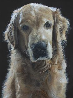 My uncle paints dog portraits. You might say that he is a little bit talented. - Imgur