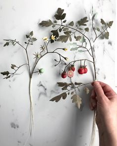 I am a determined person. This paper cherry tomato plant is growing. At the studio, I have one live plant and lots of pictures as references. Onward now to the root system. . . #woodlucker #annwood #deanlucker #paperart #paperartist #nestandflourish #thesestoriestold #aquietstyle #aquietstyle_spring #floralfix #flowergram #floralartist #dsfloral #momentsofmine #inspiredbynature #inspiredbypetals #simplethingsmadebeautiful #quietmoments #signsofspring #botanicalpickmeup #ccseasonal…