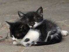 Looks like cuddling to me