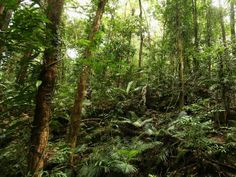 Climate change: Rainforest absorption of CO2 becoming erratic - Science - News - The Independent