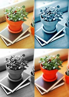 great review of PicMonkey.  and I love this little plant too!