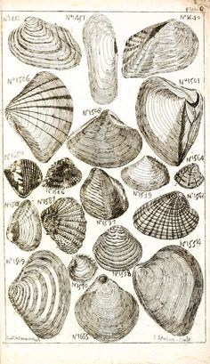 Free vintage printables, I was just on this website for a half hour and i saved like. I have a problem. Gravure Illustration, Free Printable Art, Free Printables, Decopage, Seashell Crafts, Arte Floral, Shell Art, Shabby, Beach Art