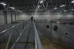 fiskeindustri nordjylland gangbro