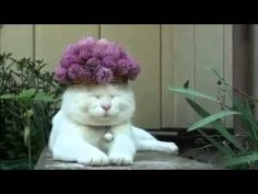 10 Funniest Cat GIFs Of The Week