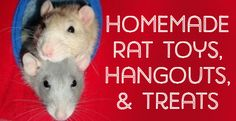 Homemade Toys, Beds, Cages, and Accessories for Pet Rats