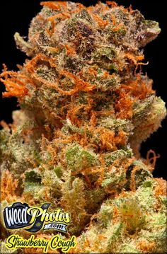 Strawberry Cough Marijuana Strain Pictures
