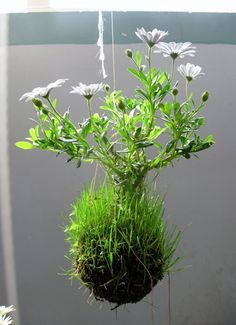 japanese hanging baskets - Google Search