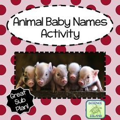 Great vocabulary game for Back to School! Students will improve their animal vocabulary by matching animal names and pictures with the baby names. Two worksheets are also included to reinforce the vocabulary. Did you know that a baby platypus is a puggle? Awwww. This product is educational fun at it's cutest!