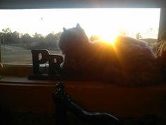 Bonnie Blue watching the sun set.
