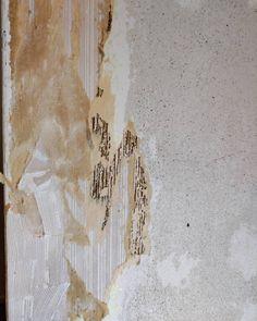 Se tunne kun edellinen remppaaja on poistanut vanhat tapetit vain keskeltä seinää ja reunoissa parhaillaan 5 tapettikerrosta... Onneksi on tapetinpoistoaine! . . . #sisanna #sisannasisustus #maalaammeilolla #tapetinpoisto #nouhätä #tapetinpoistoaine #pientäpintaremonttia #pohjatyöt #hyvinonnistuu #hyvätästätulee Sissi, Artwork, Instagram, Work Of Art, Auguste Rodin Artwork, Artworks, Illustrators
