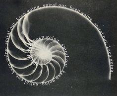 Fibonacci + quote - don't care for the quote, but like the idea