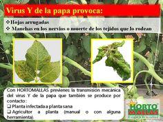 Usar malla espaldera HORTOMALLAS para entutorar hortalizas reduce la incidencia de virosis y otras enfermedades.