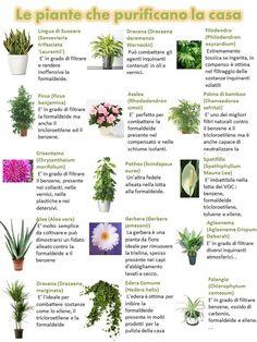 Le piante da appartamento ossigenano l'ambiente, depurano l'aria, contrastano l'umidità, eliminano i cattivi odori e allontanano allergie e sostanze nocive