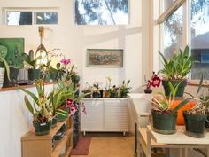 "The ""Orchid Studio""—A Tiny Backyard Studio by Seattle's First Lamp - Dream Big Live Tiny Co. Seattle, Backyard Studio, She Sheds, Tiny House Movement, Tiny Spaces, Tiny Living, Lamp Bases, Home Goods, Planter Pots"