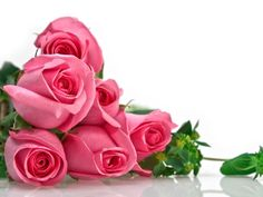 Pc Wallpaper Pink Flowers Roses And Top Wallpaper, HQ Backgrounds ...