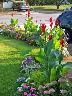 Love cannas! Colorful border with tropical looking cannas adding height, and visual interest.