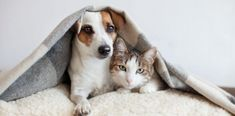 One of the best parts about being a pet owner is helping your dog grow and develop. You may take your pet on daily walks and treat them to the best kibble, but if you want to support their well-being in another way, Joy Organics is here to help. Cat Urine Remover, Cat Urine Smells, Urine Stains, Dog Urine, Dog Insurance, Pet Memorials, Animal Jewelry, Four Legged, Dog Treats
