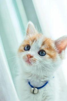 sweet kittie