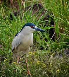 Night Heron on the banks of the RIo Grande River http://brittrunyon.com/