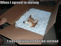 Moving with Pets - Moving Insider : Because he can't read the fine print! : Moving with Pets – Moving Insider : Because he can't read the fine print! Corgi Funny, Funny Dog Memes, Corgi Dog, Funny Dogs, Cute Dogs, Funny Animals, Cute Animals, Animal Funnies, Hilarious Jokes