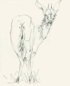 Mel Griffin, African ungulate illustration www.melgriffin.com