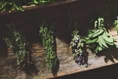 bunched herbs