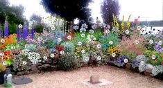Garden Online, Creative Landscape, Desert Plants, Garden Borders, Colorful Garden, Flower Beds, Deco, Horticulture, Perennials
