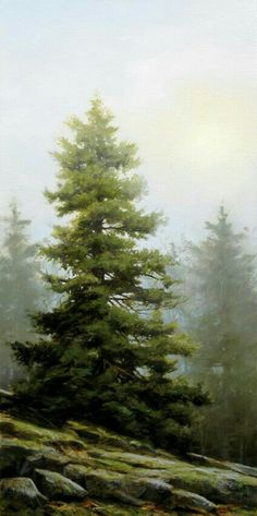 2c173452f6f6f24d8b49bfddda91e2b9.jpg (424×850) Painting & Drawing, Oil Painting Landscapes, Oil Painting Trees, Watercolor Trees, Watercolor Landscape, Watercolour Painting, Oil Paintings, Watercolors, Pine Tree Art