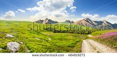 #composite #summer #landscape with high wild #grass and #purple #flowers near the #road in #mountains