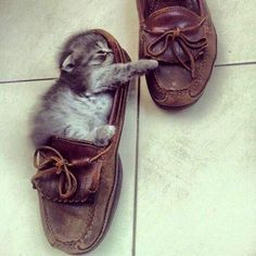 Cats will sleep anywhere.  This little guy is brave sleeping in a shoe.