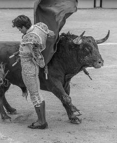 Juan del Alamo - Dudero (Pedraza de Yeltes - 28/03/2016). http://www.jeromem.com/blog/juan-del-alamo-dudero-pedraza-de-yeltes-2 #Arles
