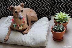 Awesome Lola wears FREE www.rudelliebe.de Halskette Hunde Hundehalskette #hund #hunde #hundehalsband #hundeleine #leine #halsband #tau #tauwerk #boho #hippie #rudelliebe  #bully #bulldog #dog #ilovemydog #free #rudelliebe #hippie #boho #dog #ilovemydog #besterfreund