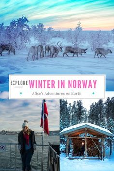 The Ultimate Guide to exploring Norway in Winter. From Sauna culture in Oslo and dogsledding in Alta to herding reindeer with the Sàmi in Finnmark.  #Norway #winter #Travel