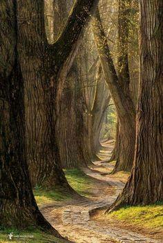 dense forest walking path