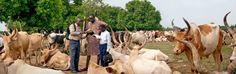 Sudan del Sur , predicando en lengua Bari , cerca de Yuba, a un hombre de la tribu mandari