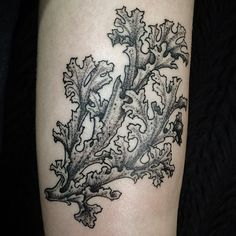 Icelandic moss tattoo for Jess of witchininthekitchen, by Dan Bones at Leathernecks.