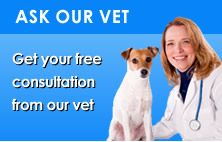 """Ask A Vet Free Online The """"Ask Our Vet"""" section aims to answer any questions you may have about your pet's health.  Each month we'll award $100 to one lucky winner of our 'Question of the Month' prize, which we will choose based on the originality and usefulness of the question. We will publish the winning question and answer on this page every month. Will it be you?"""