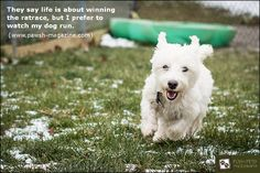 """""""They say life is about winning the ratrace, but I prefer to watch my dog run.""""  Especially true as a Greyhound mom."""