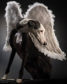 paul croes photography~ pira with wings