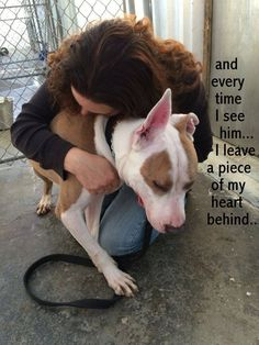 *AND AS MUCH AS SHE TRIES TO REASSURE HIM...HE KNOWS THE CAGE...ALWAYS WAITS.... NASSAU COUNTY, LONG ISLAND NY- CONTACT his advocate at 917-864-2443 Luke, 3 year young male bulldog mix He was found in a park, and she was told he was most likely dumped there by his owner...as he had been there for days. His eyes were completely shut, and he was taken immediately to the vet, where he received surgery in both eyes for entropion. And now, although he sees well, he waits in a cage in boarding…