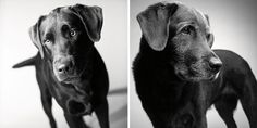 Heartmelting Pics Of Aging Dogs Show Them Grow From Puppyhood To Old Age