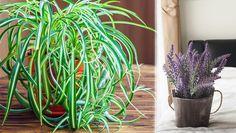 Den gröna inredningstrenden som råder är en fröjd för ögat, men det finns också många hälsoaspekter till varför du ska dekorera med växter.  Inte bara höjer växterna luftfuktigheten...