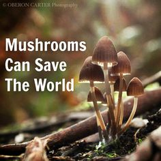 44 best mushrooms images on pinterest fungi mushrooms and edible mushrooms can save the world we are wildness blog fandeluxe Gallery
