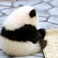 panda[16763499]の画像。見やすい!探しやすい!待受,デコメ,お宝画像も必ず見つかるプリ画像