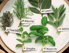 Os Benefícios dos Temperos e Ervas de Cheiro da Cozinha Brasileira